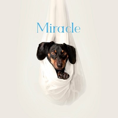 The Swimming Pool Miracle Cover