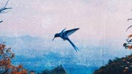 JKEY HUMMINGBIRD Cover