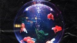 CHIN CHILLA Goldfishs Dream Cover